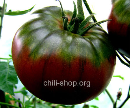 tomate black krim blaue tomate kaufen chili seeds im shop chili. Black Bedroom Furniture Sets. Home Design Ideas