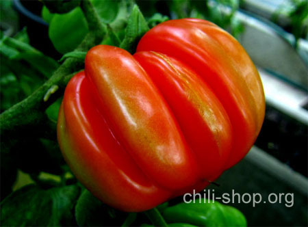 tomate rot charlie chaplin blaue tomaten samen kaufen chili seeds im shop chili. Black Bedroom Furniture Sets. Home Design Ideas