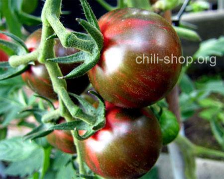 tomate rot gruen violet jasper blaue tomate kaufen chili. Black Bedroom Furniture Sets. Home Design Ideas